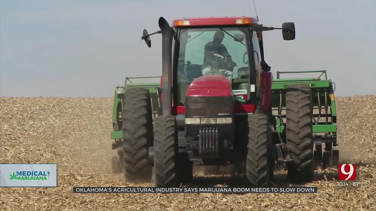 Oklahoma's Explosive Growth Of Marijuana Affecting Farmers, Says Agricultural Associations