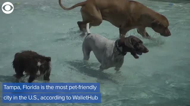 Watch: The Most And Least Pet-Friendly Cities In The U.S.