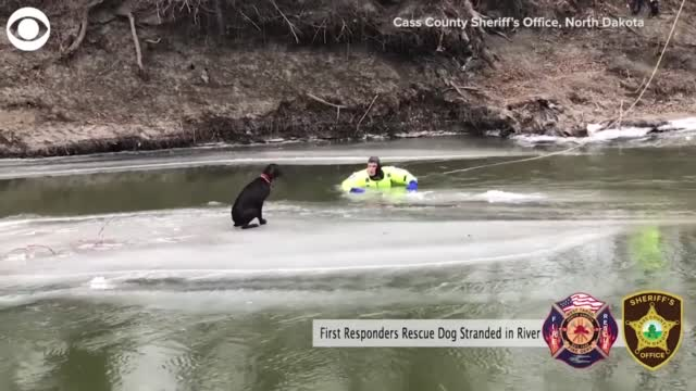 WATCH: A Passerby Rescues Dog Stranded On Icy River
