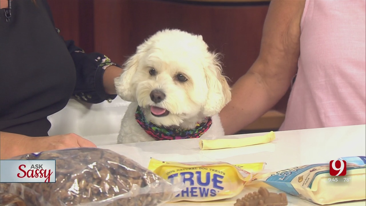 Ask Sassy: Healthy Treats For You Dogs