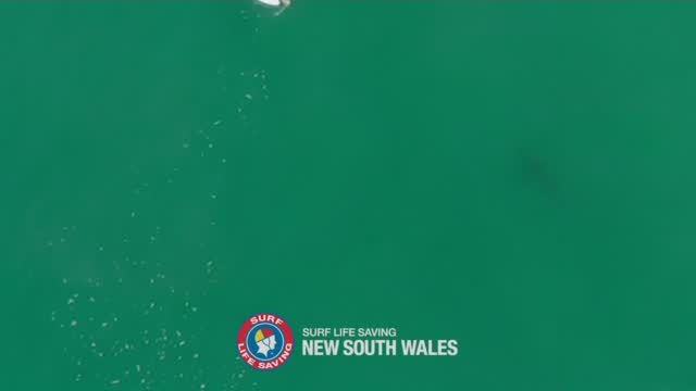 Dramatic Drone Video Shows Surfer's Close Call With Shark: 'My Heart Just Sank'