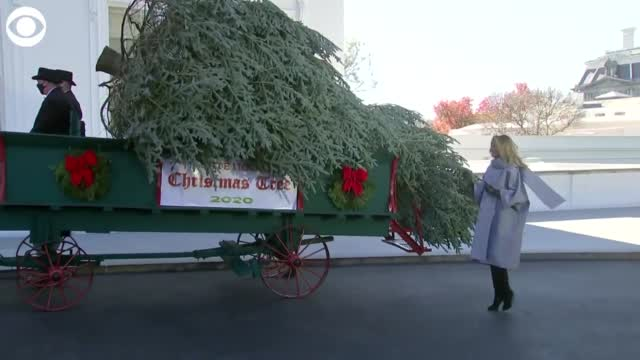 WATCH: First Lady Melania Trump Accepts The White House's Christmas Tree