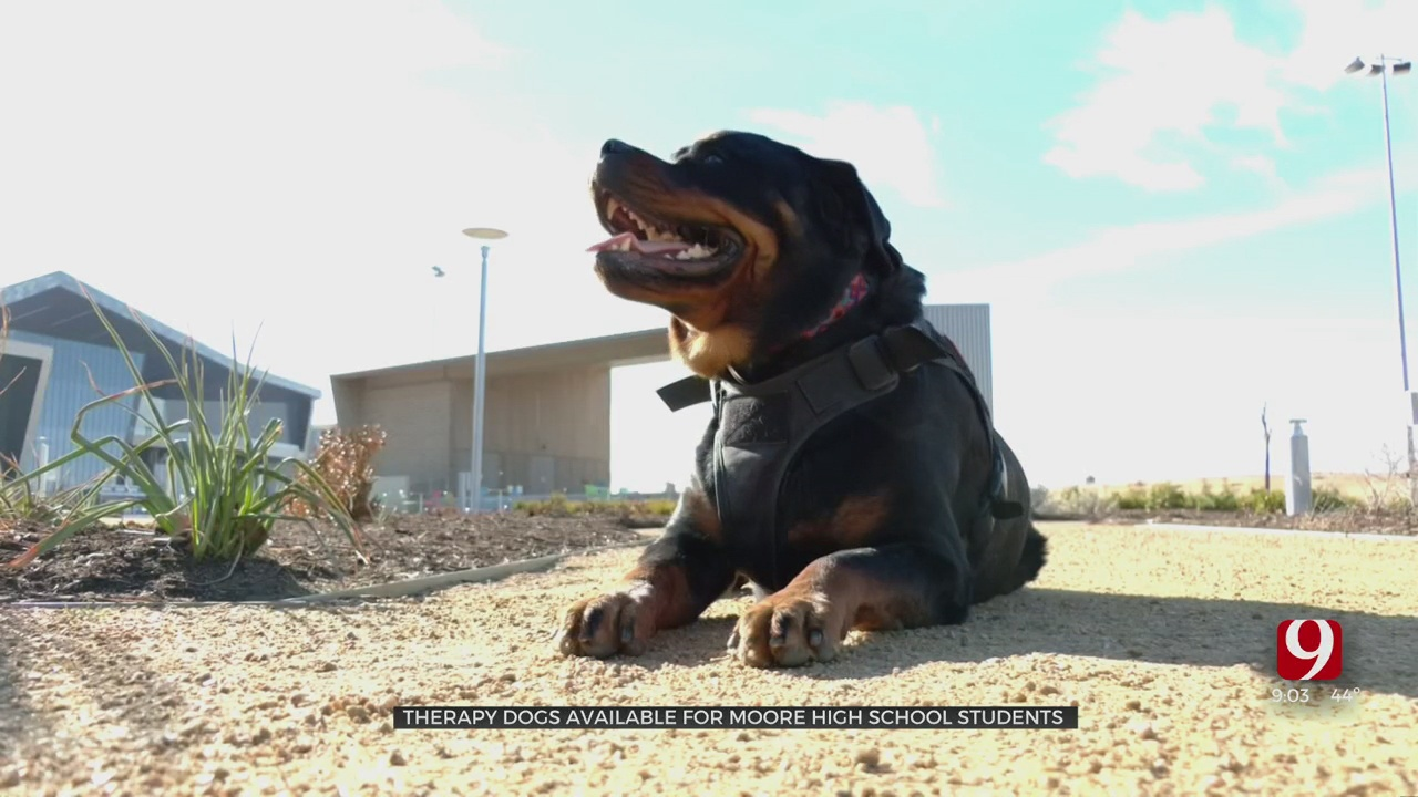 Therapy Dogs Available At Moore High School 1 Year After Deadly Crash