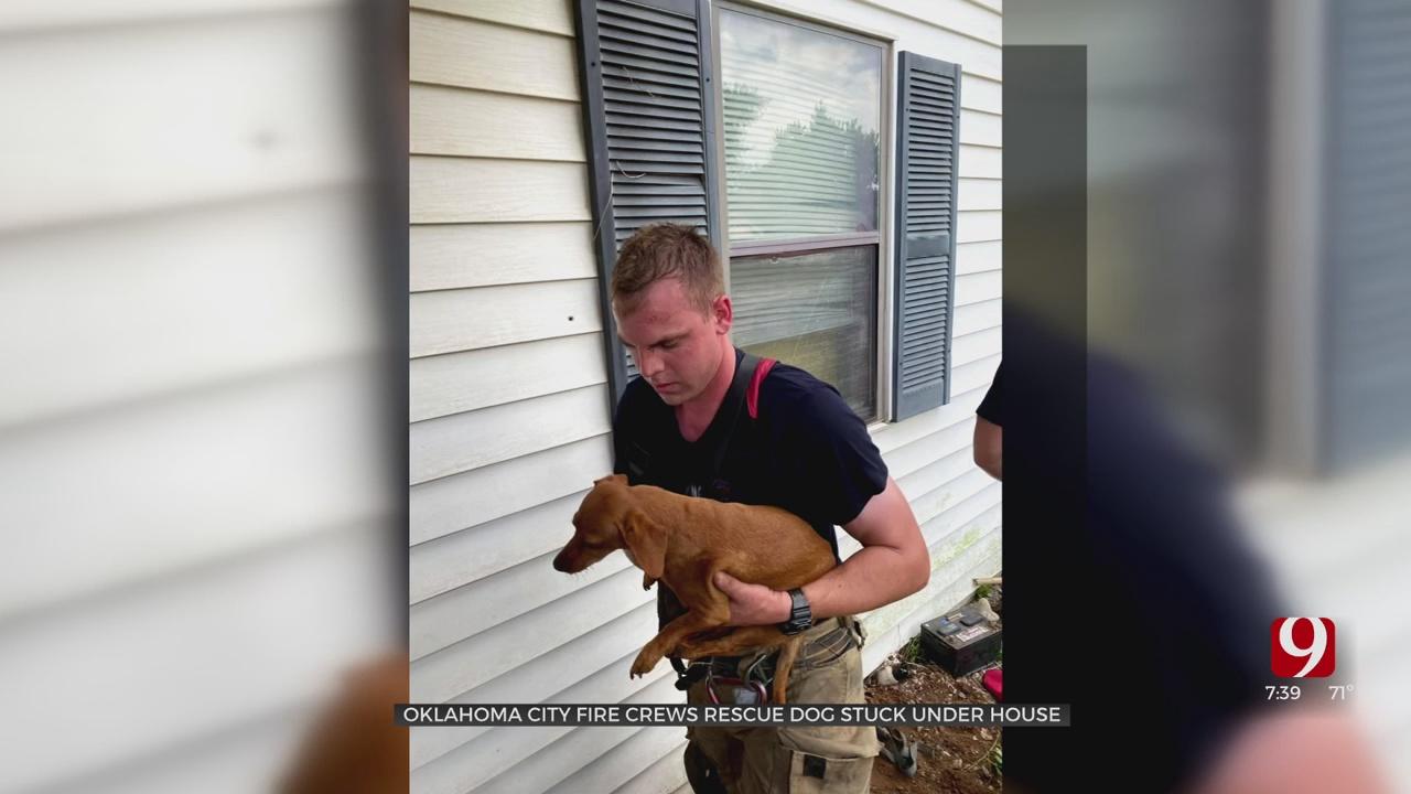OKC Fire Department Saves Puppy Stuck Under Porch