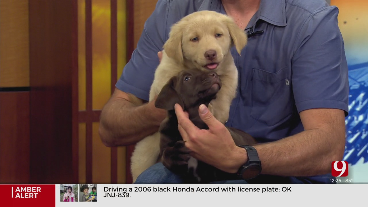 Pet Of The Week: A Bunch Of Puppies