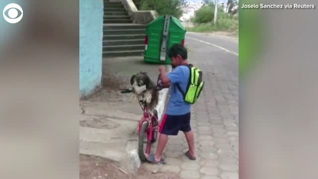 WATCH: Little Boy Puts On Mask For Dog Before Himself