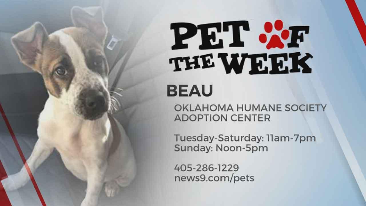Pet Of The Week: Beau