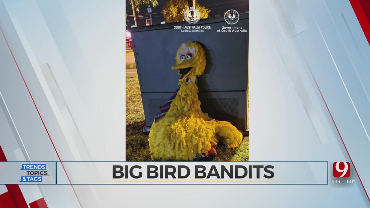 Trends, Topics & Tags: Big Bird Bandits