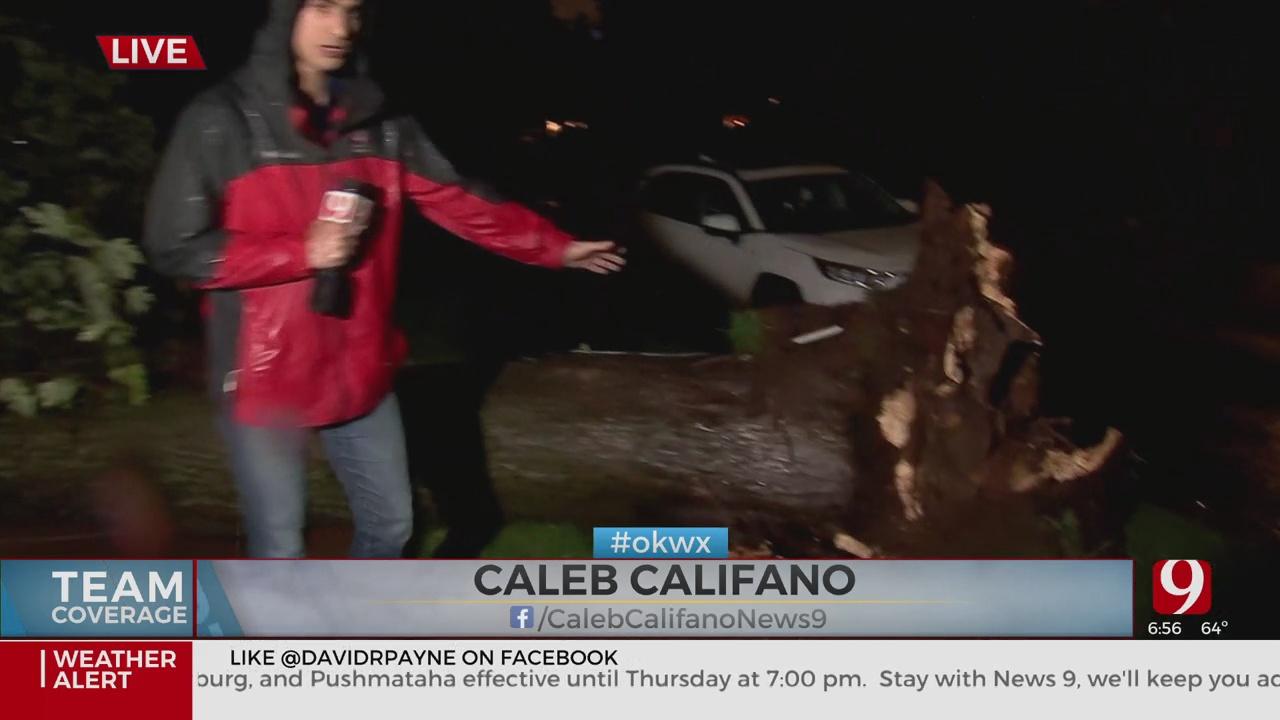 Caleb Tree Damage