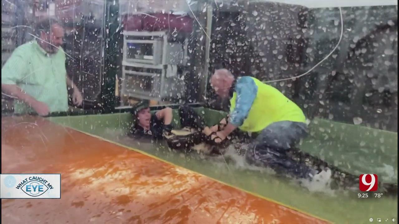 Alligator Handler Recovering After Attack, Daring Rescue