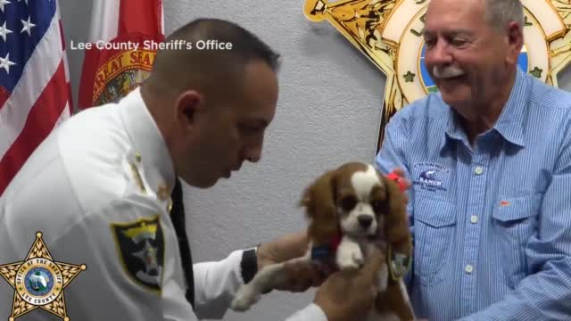 Dog Rescued From Alligator Gets His 1st Job