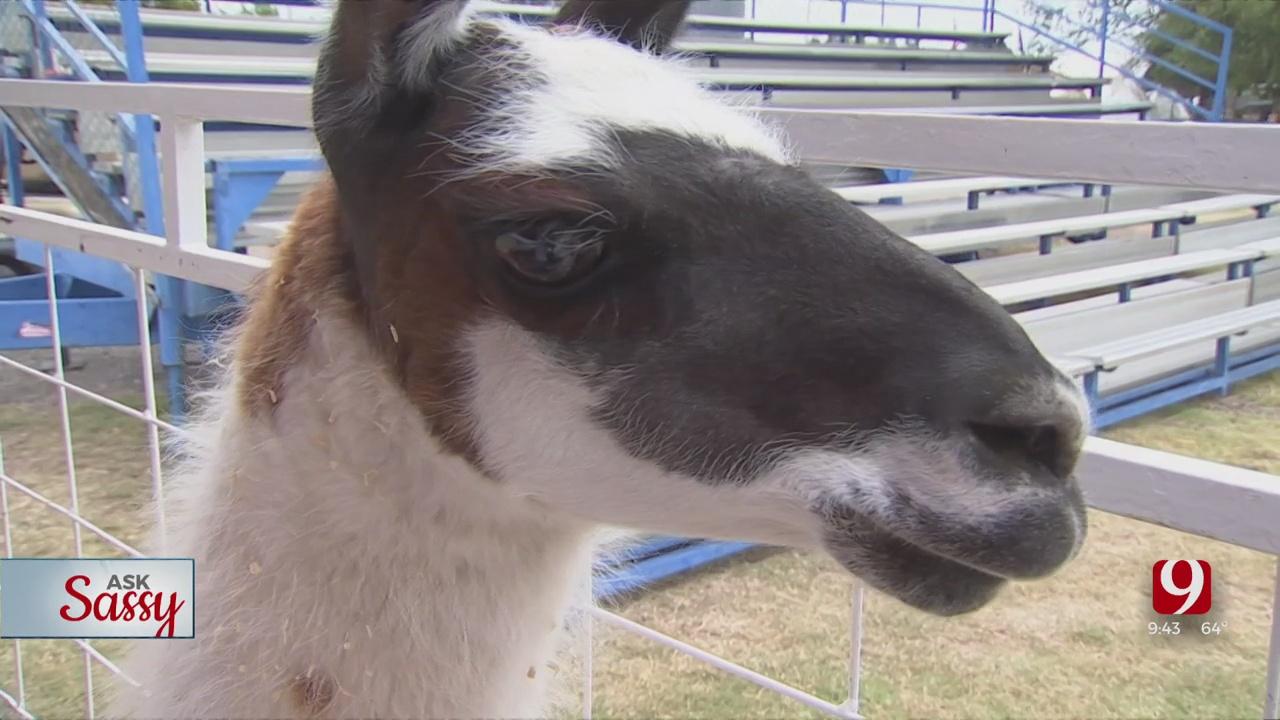 Ask Sassy: Animals At The Fair