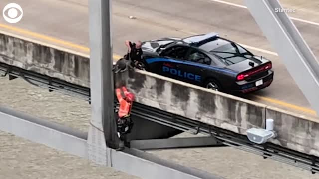 Watch: Dog Rescued From Under A Bridge Deck Over The Mississippi River