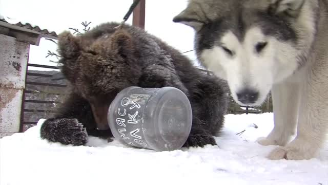Dog, Bear Cub Become Friends