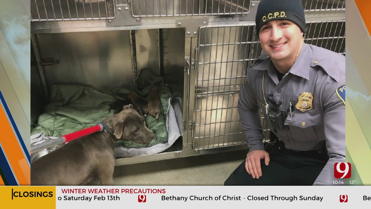 OCPD Officers Rescue Pit Bull, 6 Puppies Abandoned In 18 Degree Weather