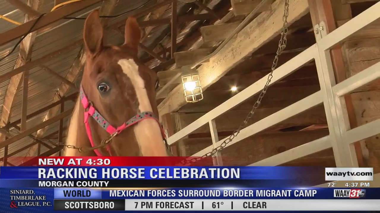 Image for 50th Annual Racking Horse World Celebration gets started in Priceville
