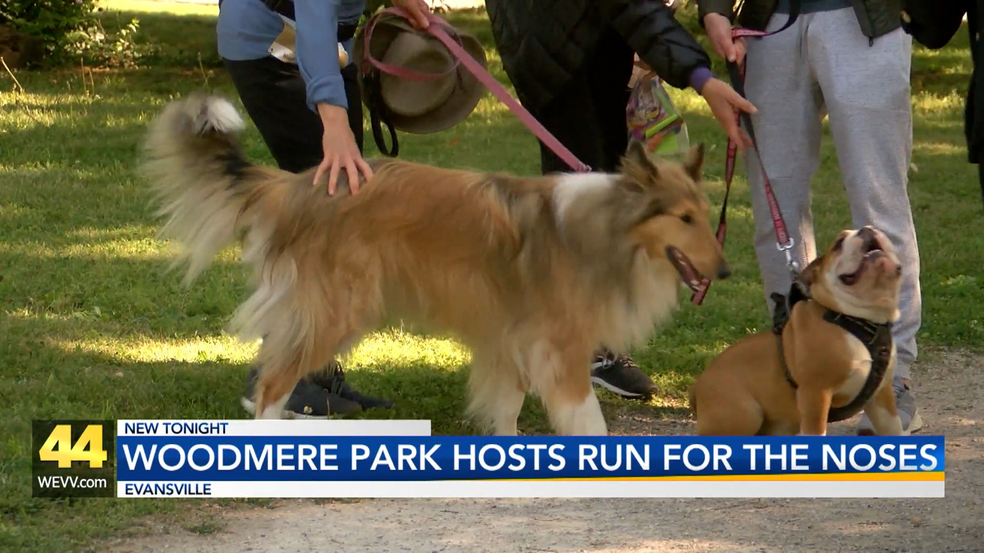 Image for Woodmere Dog Park Hosts Run for the Noses