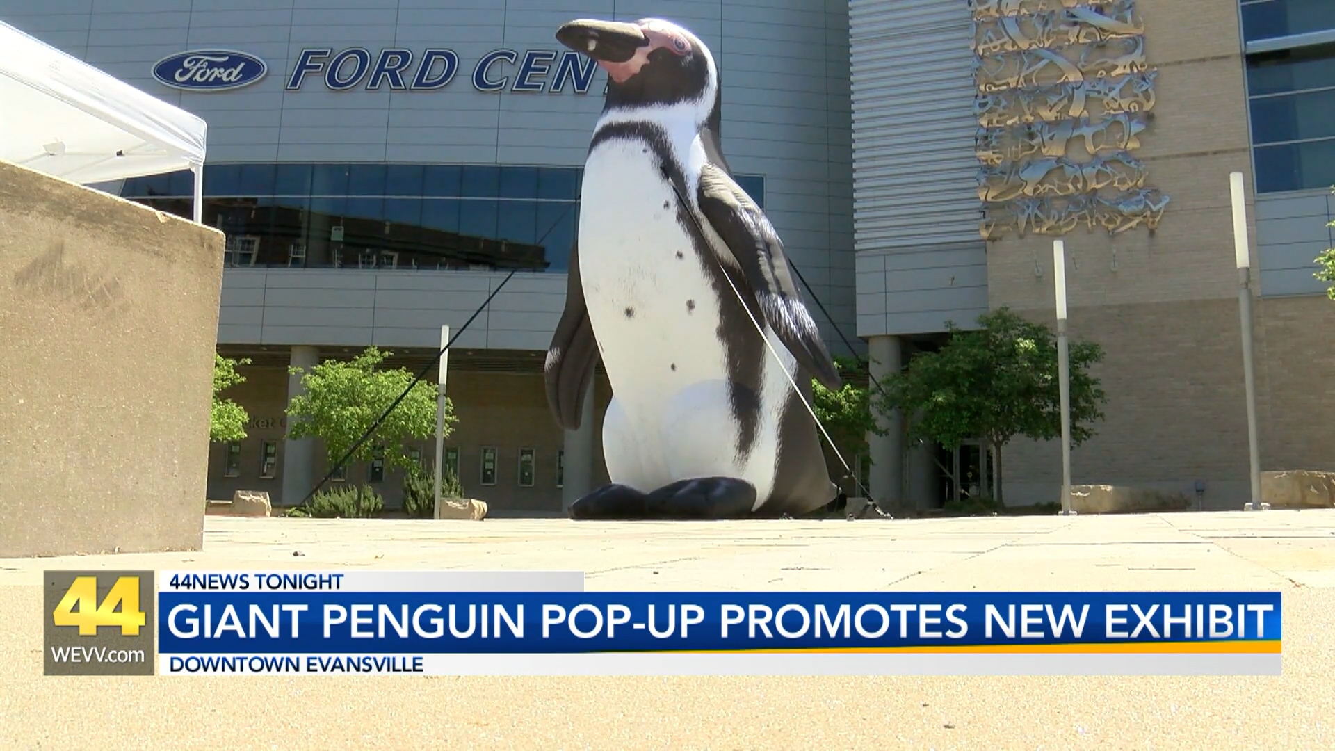 Image for Giant Penguin Pops Up in Downtown Evansville