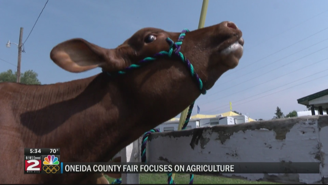 Image for Competition at the Oneida County Fair