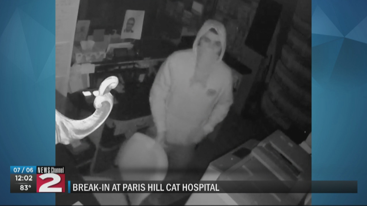 Image for Oneida County Sheriff's Office searching for suspect in Paris cat hospital burglary