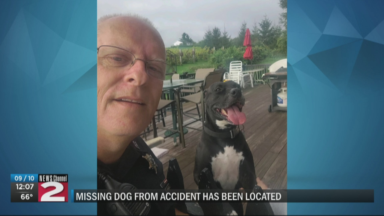 Image for Dog missing after one-car crash in Town of Paris found, returned to owner