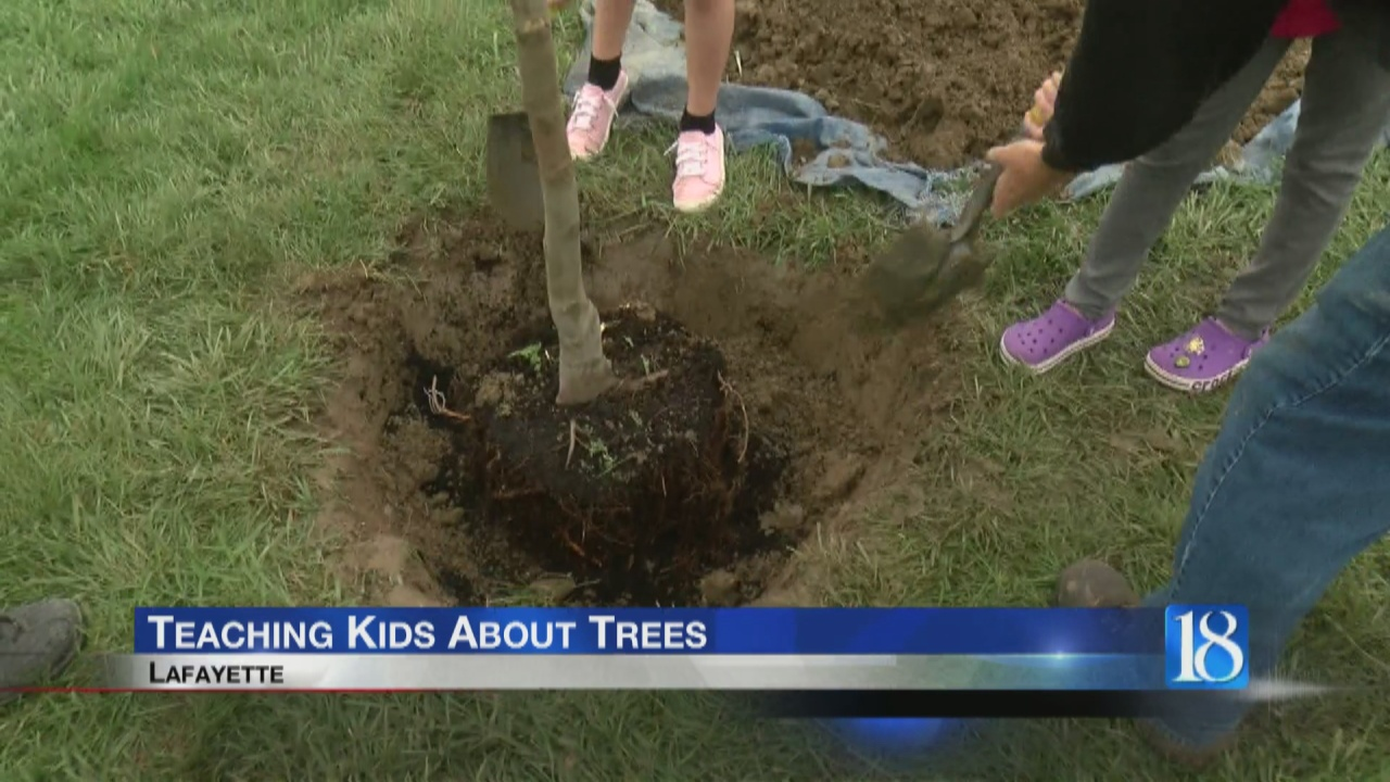 Image for Teaching kids about trees
