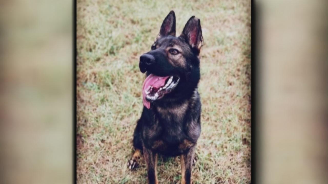 Image for Vigo County Sheriff's Office morns the loss of K9 Kaiser