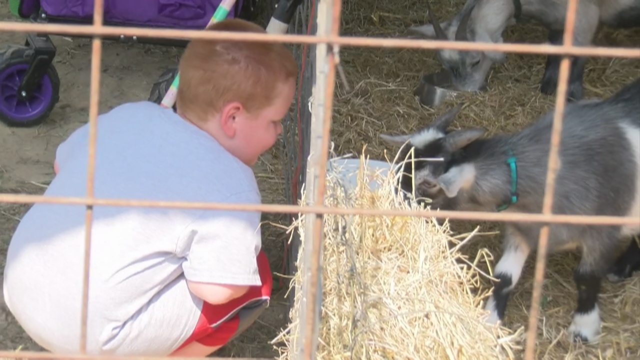 Image for Richland County fair kicks off after a year off