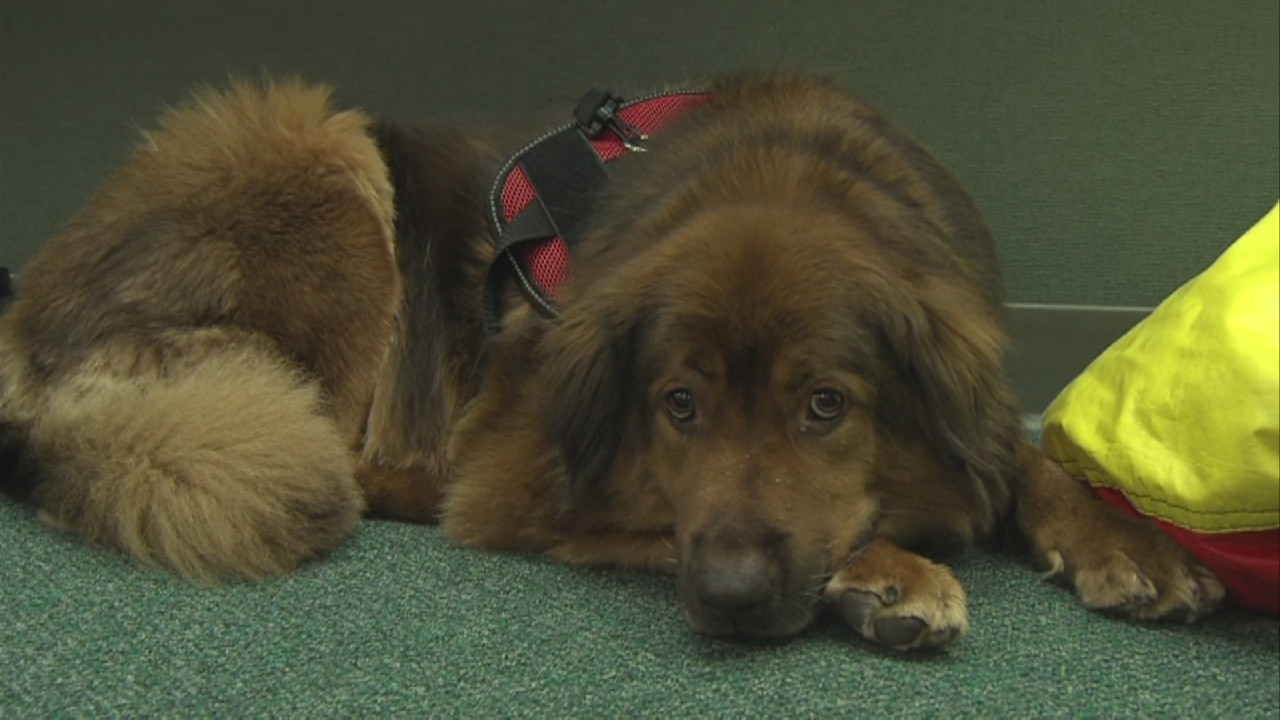 Image for 'It has made such a difference in the behaviors in the classroom.' Therapy Dog Connects With Local Kids